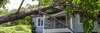 Storm/Hail/Tree Damage